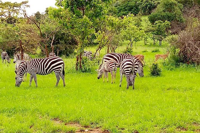 4 Days Gorilla Trekking, Lake Mburo NP & Lake Bunyonyi