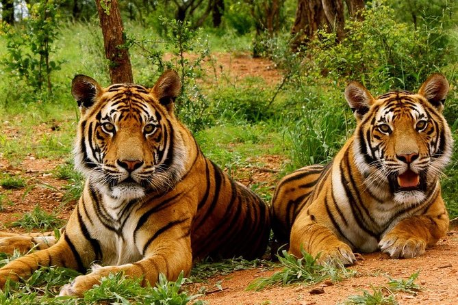 Corbett Tour (2 Nights / 3 Days)