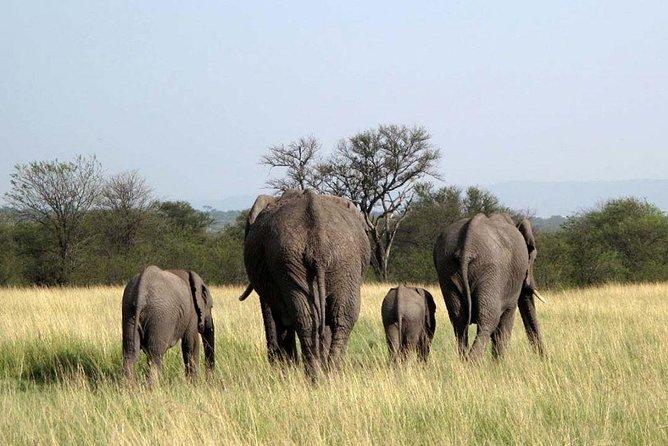 3 Days Selous Safaris