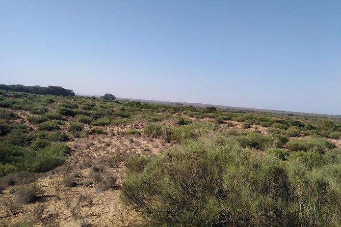 Horse riding in Agadir National Park