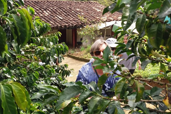 Coffee Farm, Hiking the Andes plus local food experience.