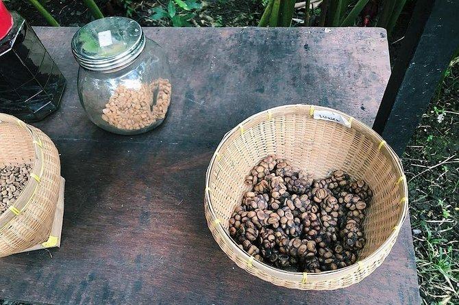 Mount Batur Sunset Trekking & Coffee Plantation