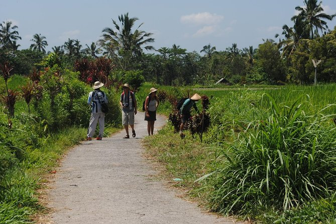Jatiluwih Rice Terraces Track