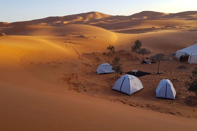 Private Wild Desert Night
