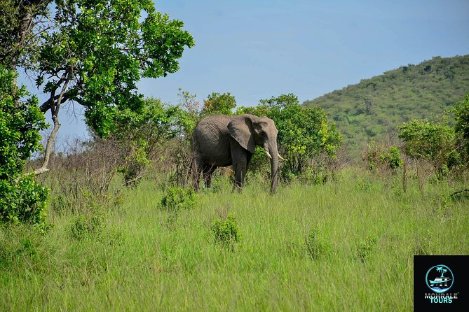 5 days 4 nights Amboseli/Tsavo West and Tsavo East National parks.