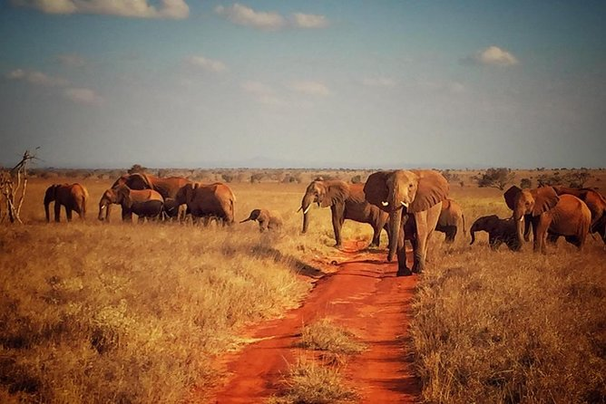2 Days (1 night) Red Elephant Special