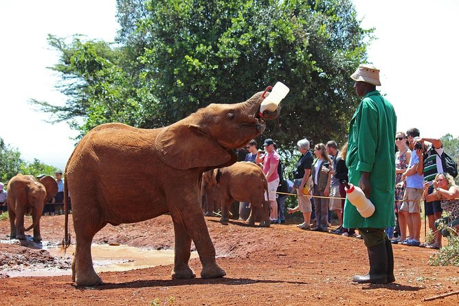 Nairobi Wildlife Tour with Hotel Pick Up