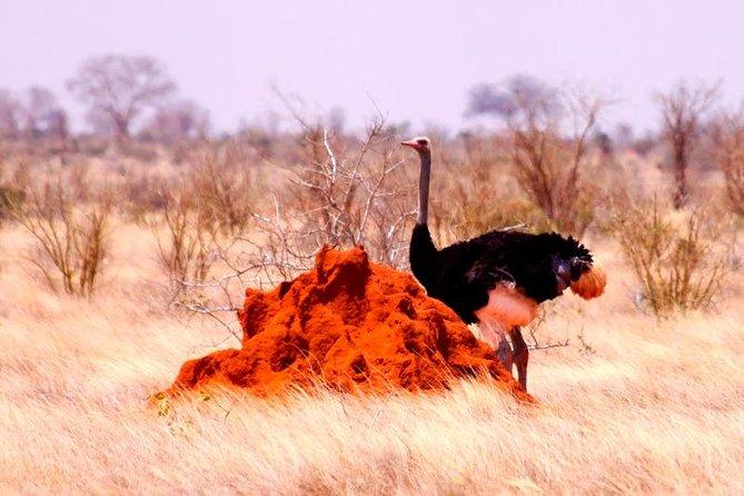 3 Days (2 nights); Tsavo East & West Safari: