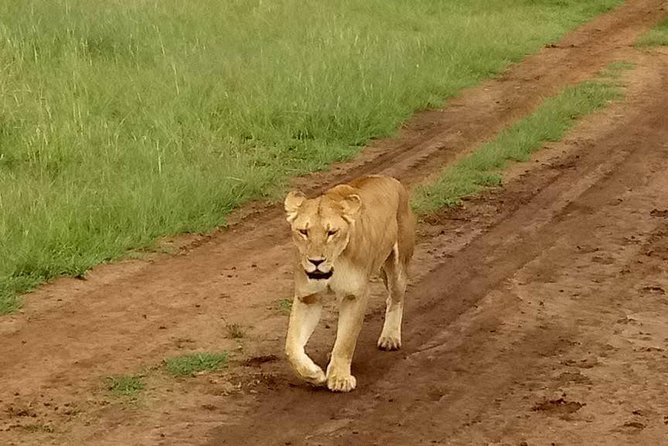 5-Days Nairobi, Naivasha and Maasai Mara National Park