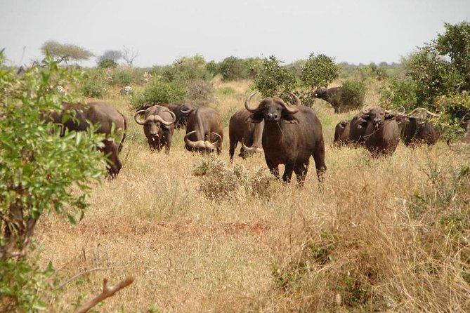 1 Day Tsavo East Safari: