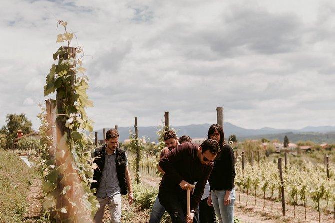Wine Tour Slovenia