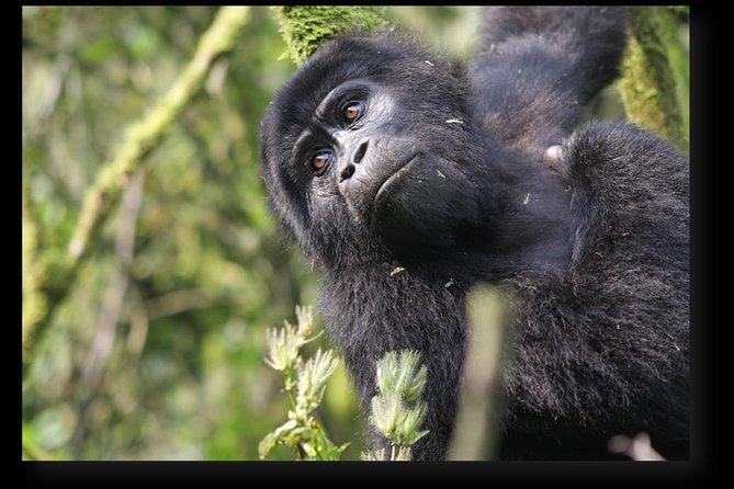 4 Days Uganda Gorilla Tracking Adventure