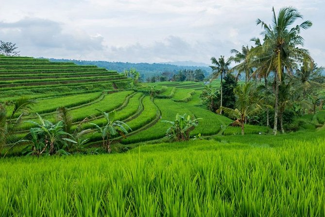 Jatiluwih Rice Terrace Bali Full Day Tour