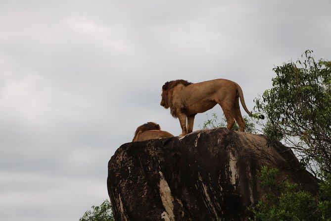 8-Day Budget Safari Uganda