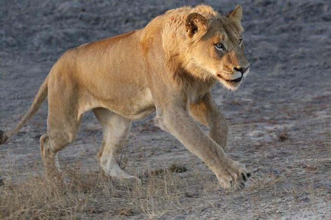 Dinokeng Game Reserve Near Johannesburg South Africa