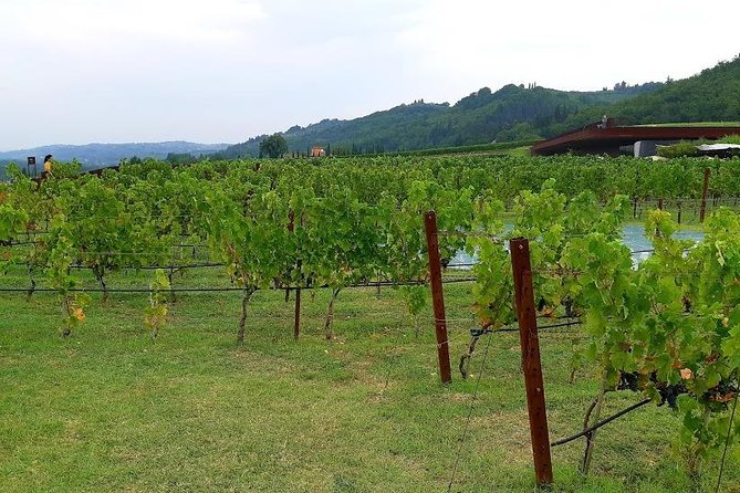 Ramble Through The Rolling Hills Of Chianti (6 Hrs) + Lunch & Wine Tasting