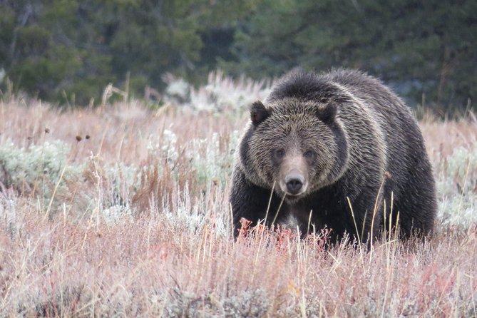 Yellowstone & Grand Teton National Parks - Ultimate Wildlife Safari