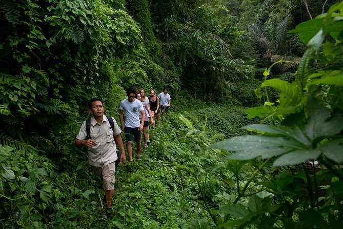 Private Full-Day Bali Jungle Trekking and Exploring Tour to North Bali