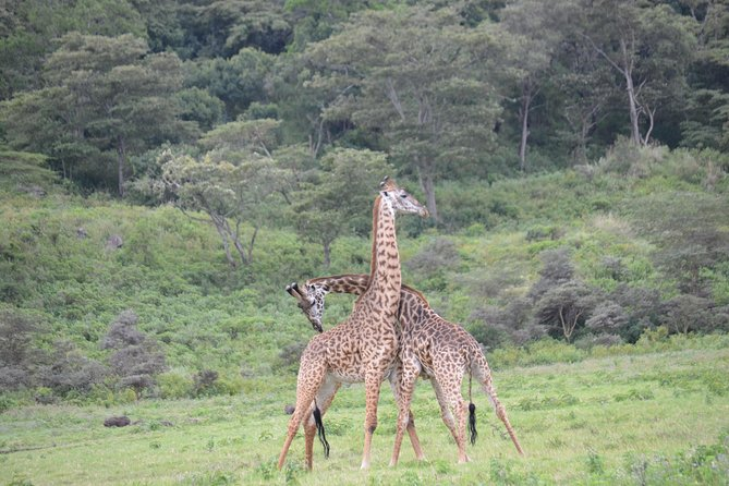 3 Days Serengeti & Ngorongoro Crater group safari