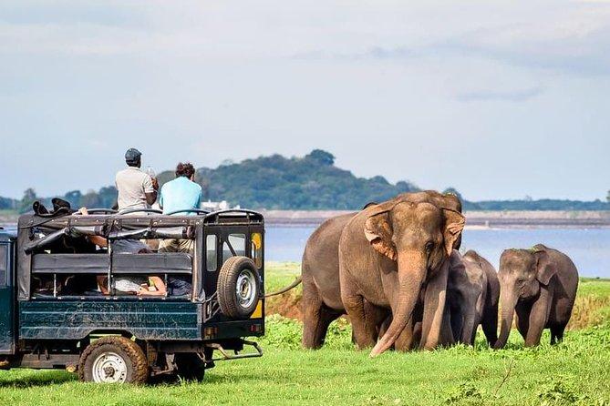 Udawalawe National Park Safari with Naturalist