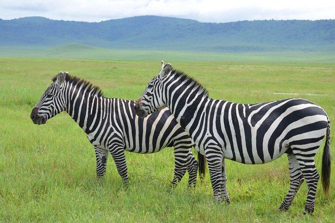 3 Days Serengeti & Ngorongoro Lodge Safari