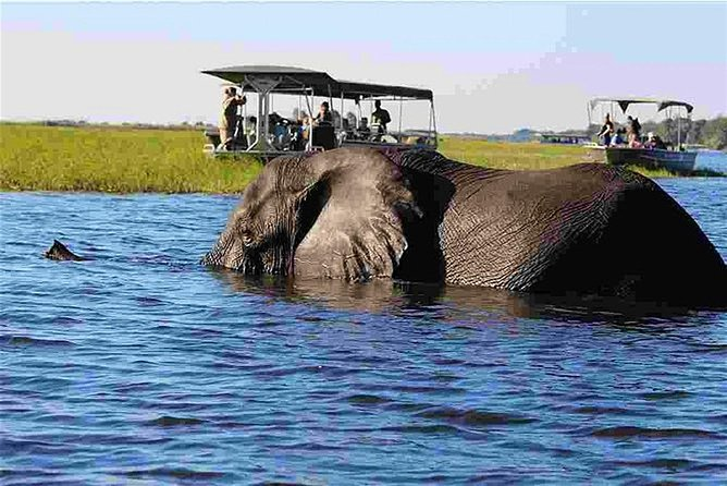 Chobe Safari Full Day Tour (ex Victoria Falls)