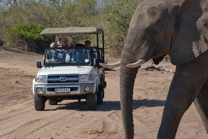 Chobe Day Trip (Safari)