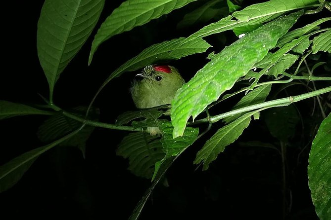 Birdwatching and Jungle Tour in Monteverde at 5:30 PM
