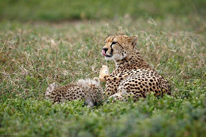 3 Days Adventure Camping Safari in Tanzania