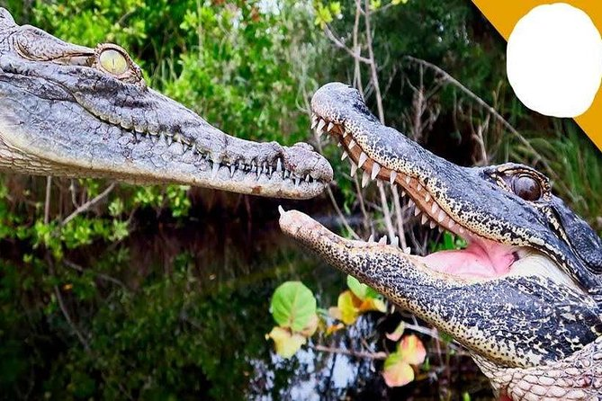 Full-Day Tour to Gharial Eco Park in Morena from Gwalior
