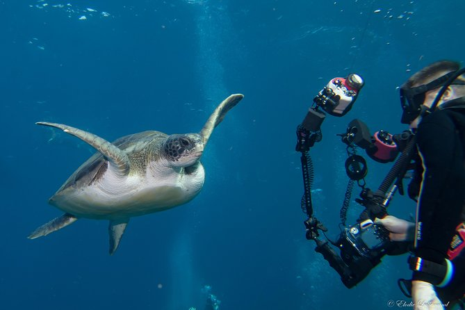 UNDERWATER PHOTOGRAPHY SPECIALITY - Improve your creativity and find your style
