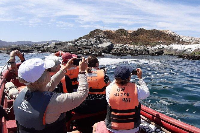 Private Cruise Shore Excursion From Valparaiso: Penguin Island