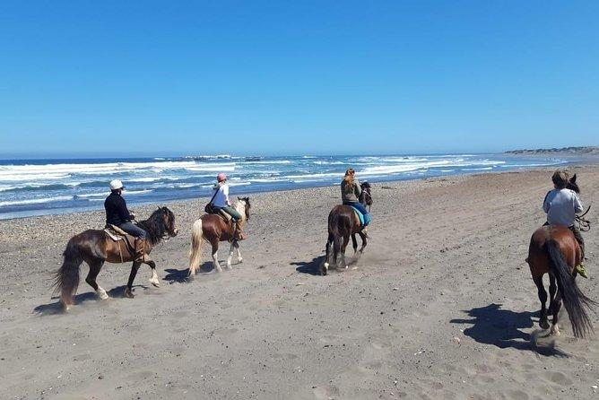 Private Shore Excursion from San Antonio: Beach Horseback Ride and Viña del Mar
