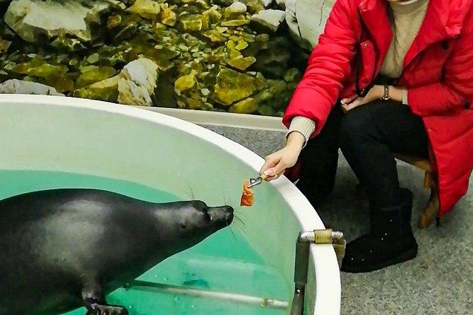 Baikal Seals Feeding