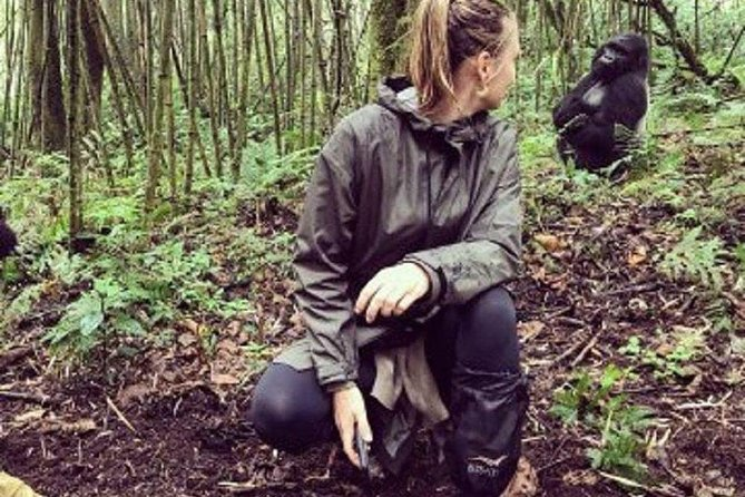 1 Day Gorilla Trekking Rwanda