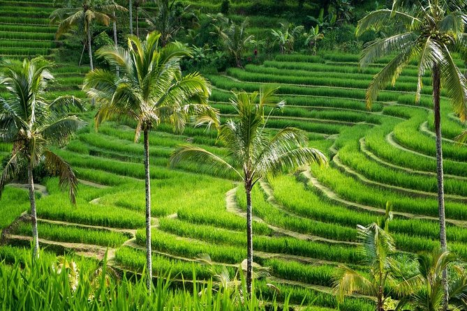 Cheapest Ubud Private Tour - Best of Ubud