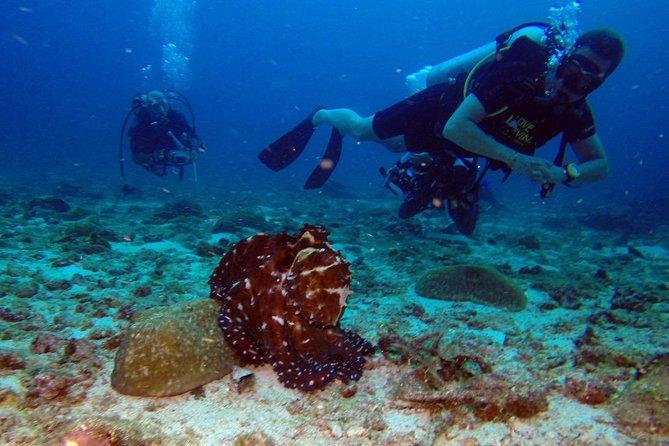 Discover Shore Dive non certified