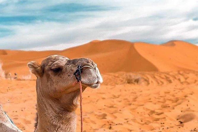 Desert tour from Fez to Marrakech 4 Days 3 Nights