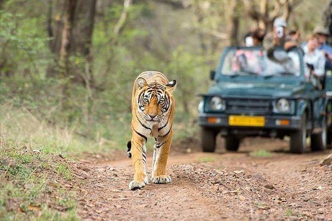 10 Days Rajasthan Tour
