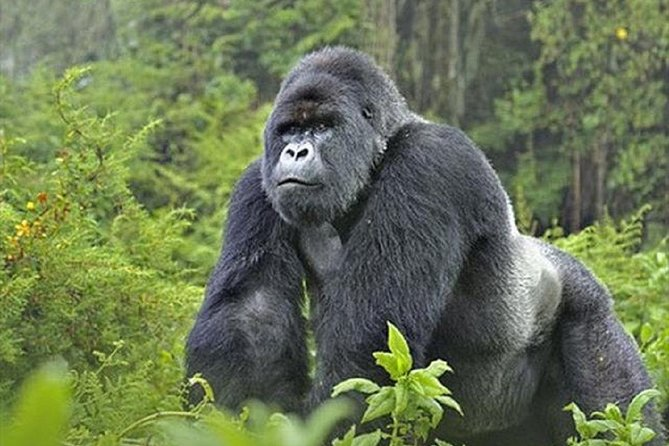6 Days Gorillas and Wildlife Safari