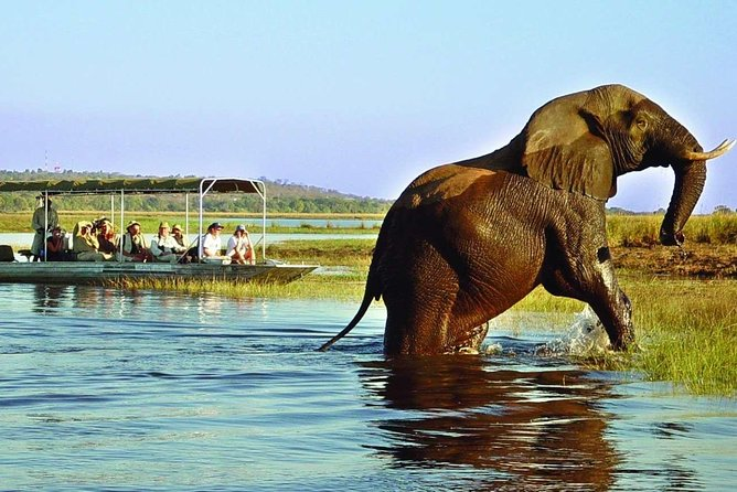 Chobe Safari Full Day Tour (ex Victoria Falls)
