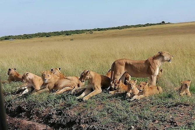 The BIG 5 Special safaris: 5 Nights 6 Days: Maasai Mara - Lake Nakuru - Amboseli