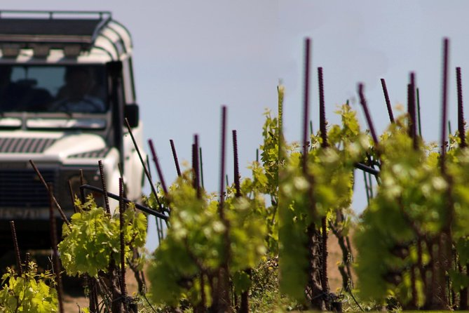 Chania Shore Excursion Vineyard and Winery Tour Half Day