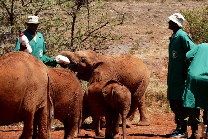Nairobi excursions : David shendrick and giraffe centre