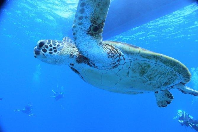 [Okinawa Miyakojima] Let's swim with sea turtles! Beach sea turtle snorkeling