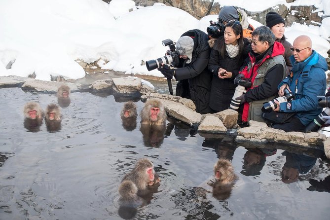 Full-Day Private Nagano Tour: Zenkoji Temple, Obuse, Jigokudani Monkey Park