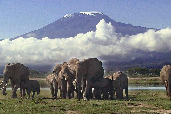 Private 3-Day Safari at Amboseli National Park from Nairobi