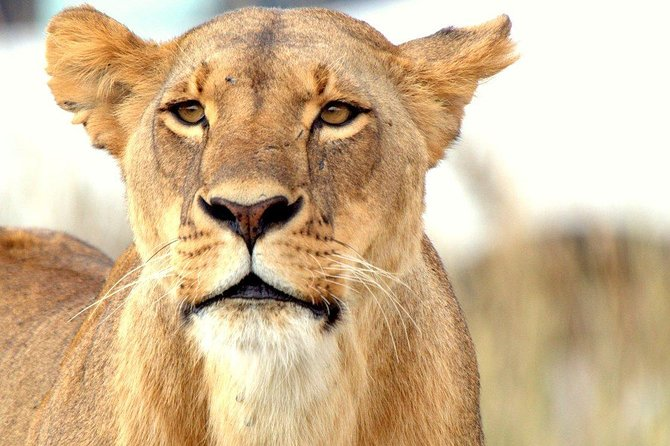 Discover Nairobi National Park Half Day Tour, Kenya