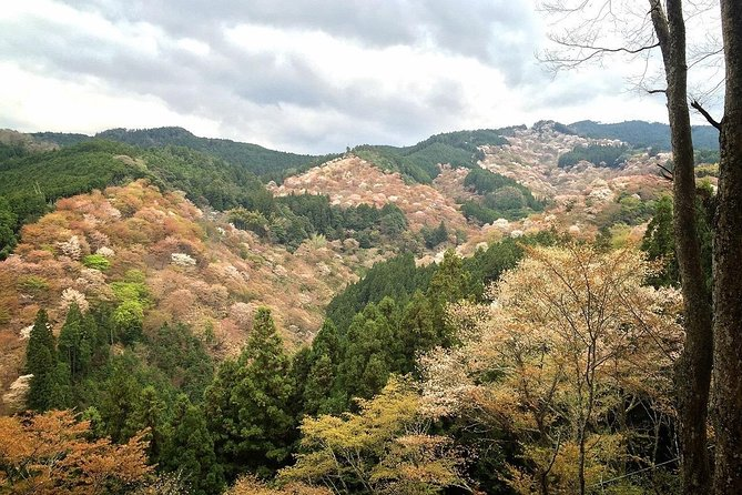 Yoshino, mountain and history
