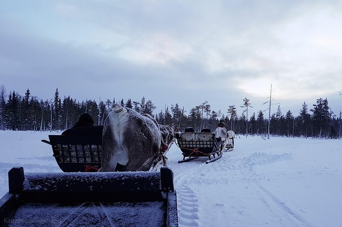 Guided reindeer farm visit and one hour sledge safari
